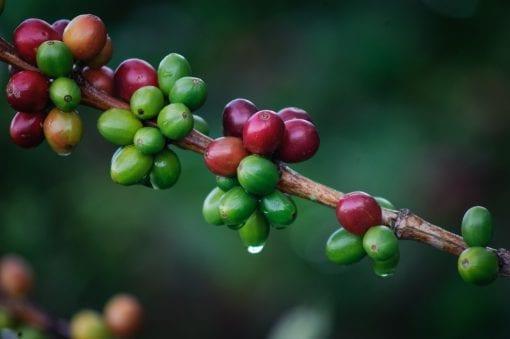 Colombuan coffee